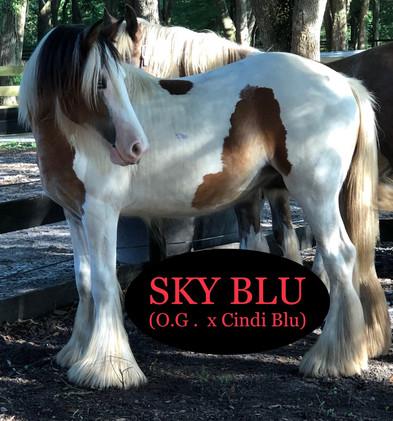 2018 1yr Sky