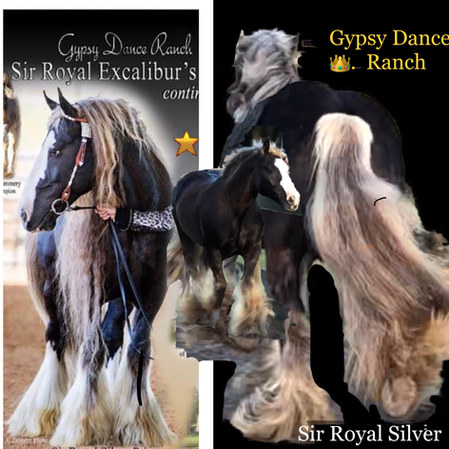 Sir Royal SILVER