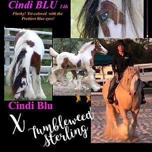 Cindy x Sterling.jpg