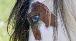 Cindi blu eyes