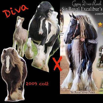 Diva x Silver.jpg