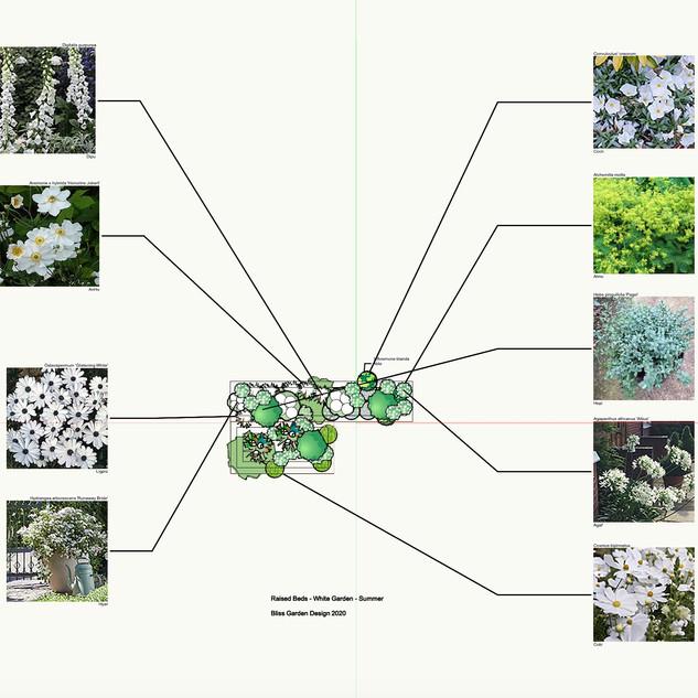 Raised Beds - White Garden Summer Plan.j