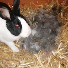 Nach 31 Tagen Tragzeit kommen die Jungtiere zur Welt (wunderbares Nest)