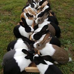 So werden die Jungtiere im Spätsommer aussehen. Sie werden ca. 3 kg schwer
