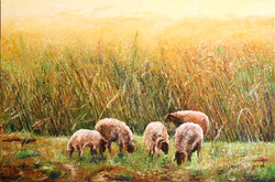 sheep-in-the-negev-bb-150-100-medium