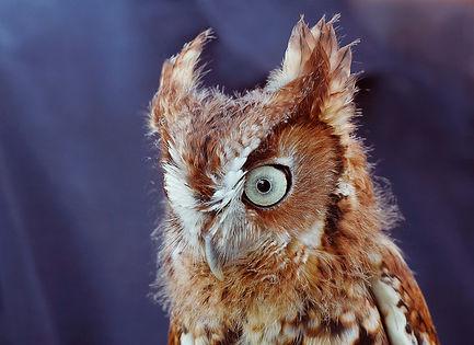 Owl-Eduardo del Solar