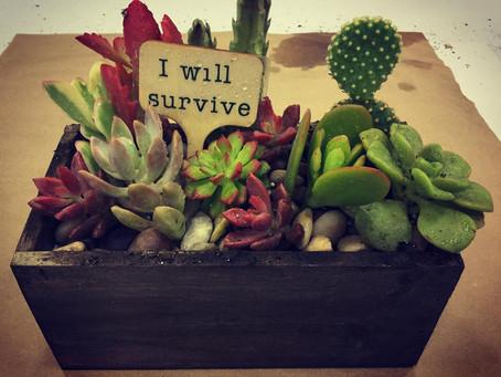 DIY Sassy Succulents