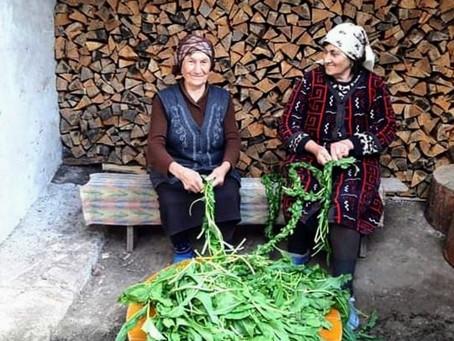 Mountain taste and aroma of plaits: Sorrel