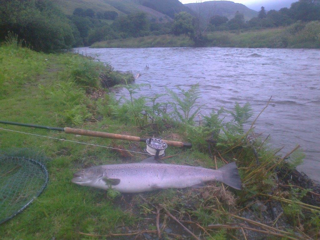 Dovey Salmon