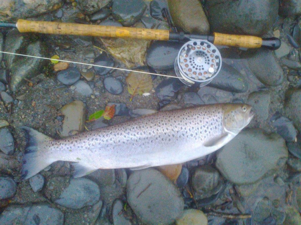 Dovey Sea trout