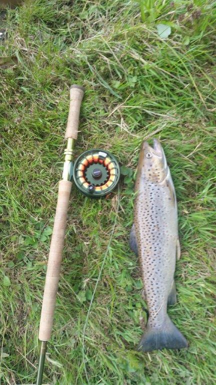 Dovey Sea Trout