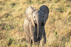 Masai Mara 2020 - 142.jpg