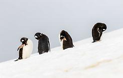 Antártida_62.jpg