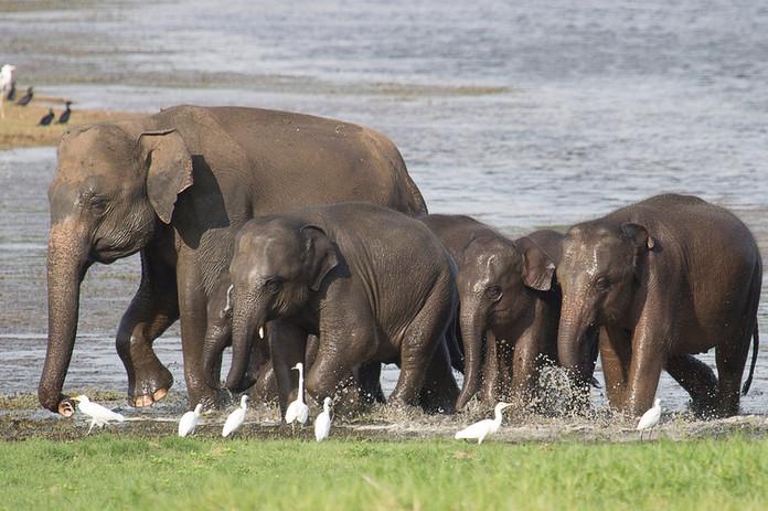 Fauna de Sri Lanka