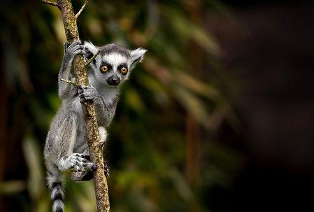 Madagascar kitesurf