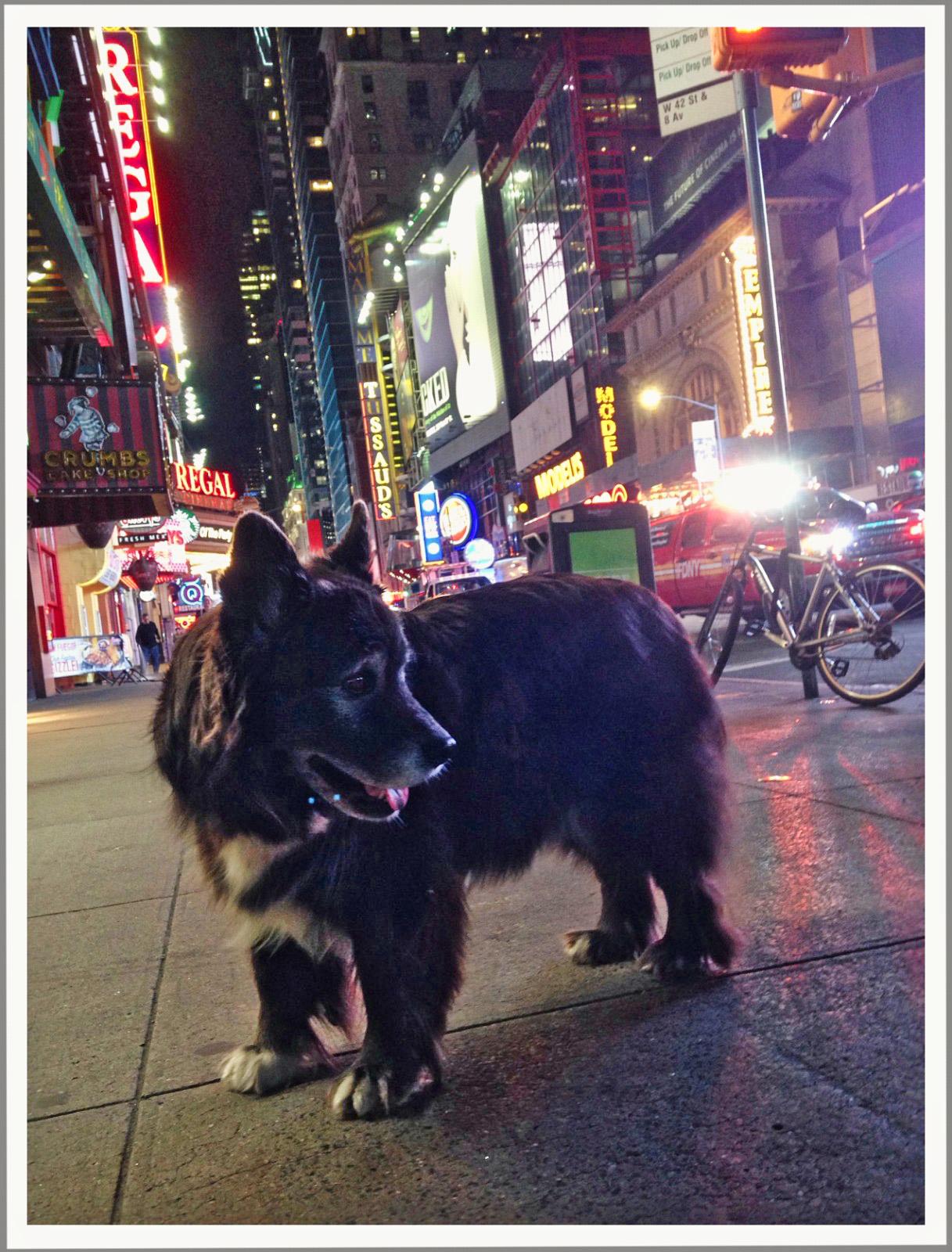 Hobbes_NYC