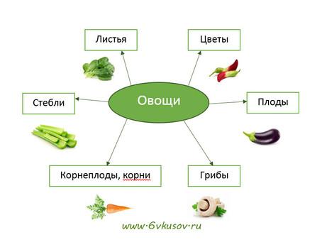 Что нужно знать об овощах