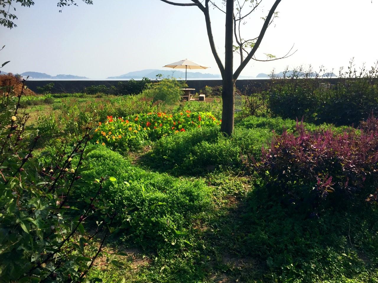 Pomaikai農園_4566.jpg
