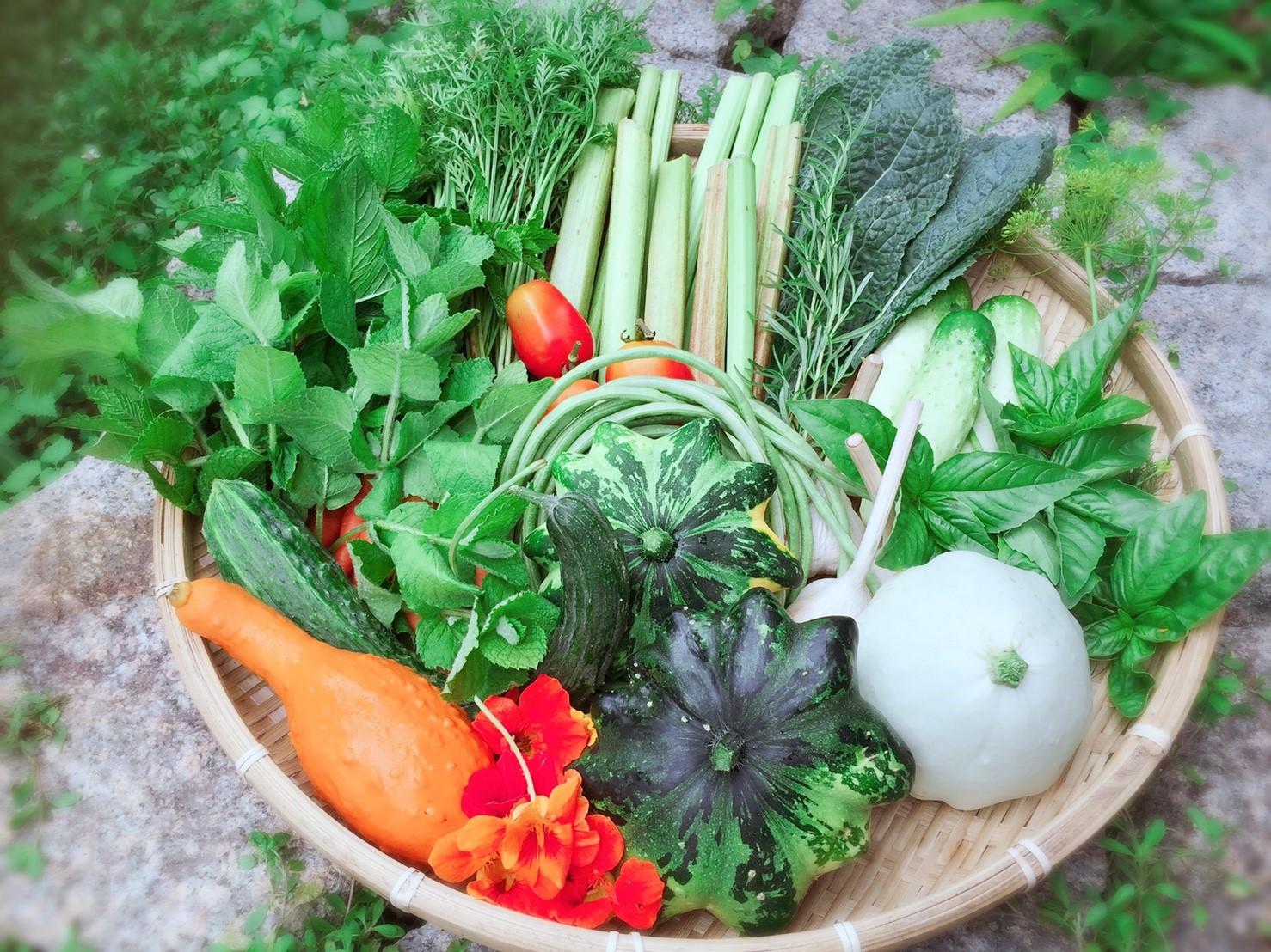 ポマイカイ野菜_9557.jpg
