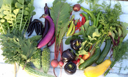 pomaikai Vegetable