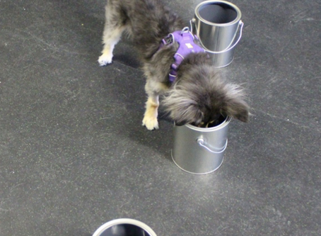 Dogs Prove There is a Scent Associated to Epileptic Seizures