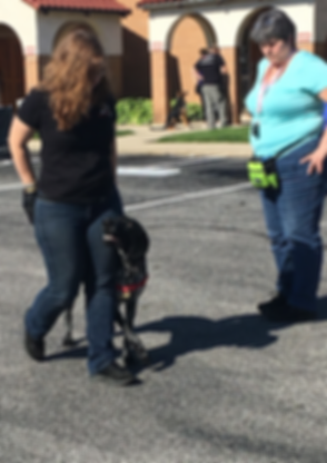 Service Dog Training Classes.png