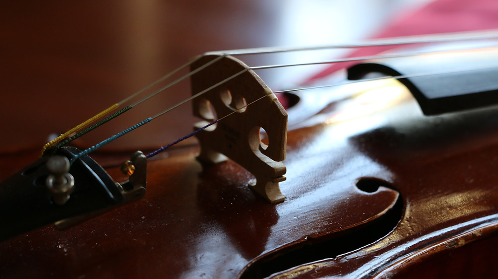 Old German violin with new setup and Dominant strings