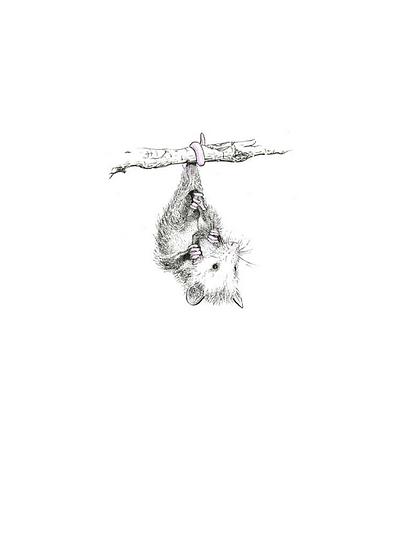 Opossum Print- by Geo.Grphcs