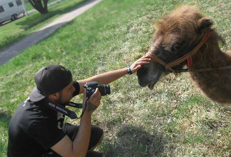 Grass | Camel | Producer | Gamedeveloper