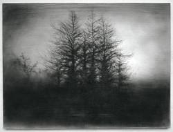 Sue Bryan (New York, NY), Vestigial Landscape: Roadside Copse, 2019