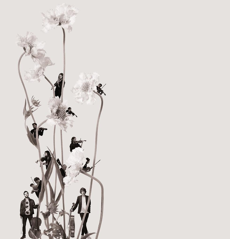 SIDE-flower-wigmore-02_edited.jpg
