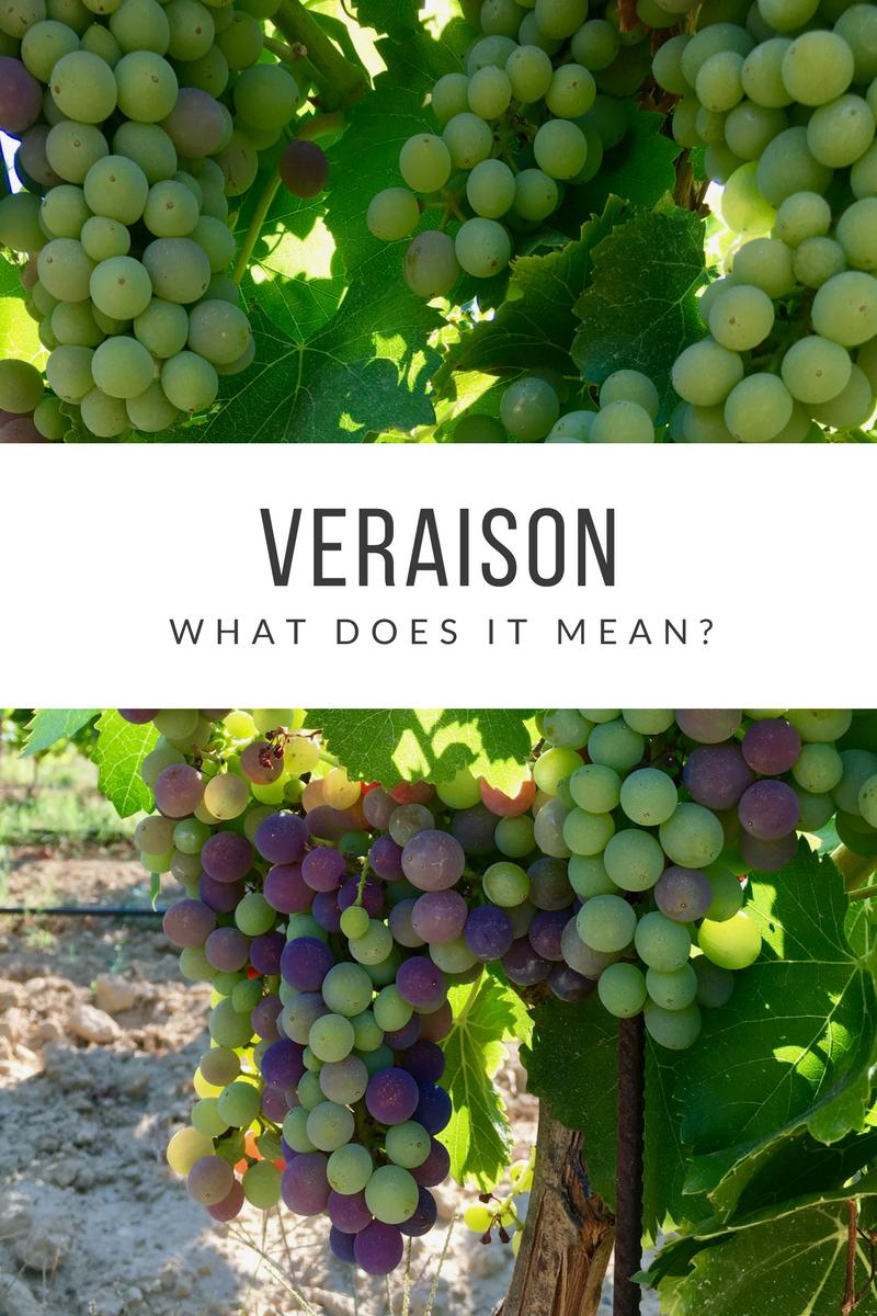 Veraison - what does it mean?