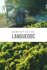 Harvest in the Languedoc