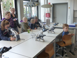 43. Mikroskopieren im Biologie-Raum