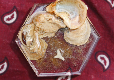Tooth and Sand Ring Dish