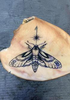 Moth on Pig Ear