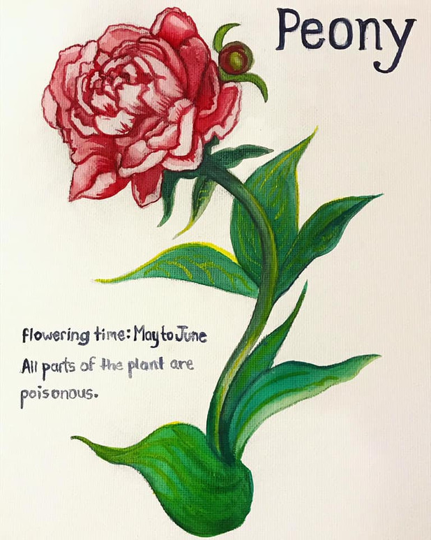 Peony in Watercolor