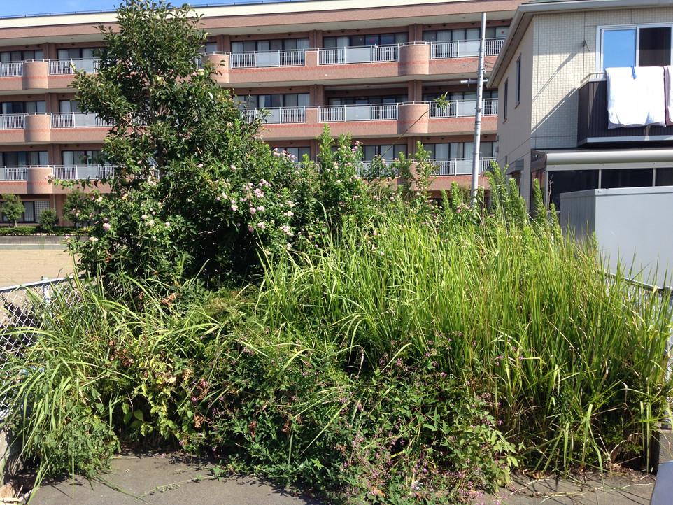 【草刈り 草むしり 伐採】えにしプランニング 便利屋 浜松市南区