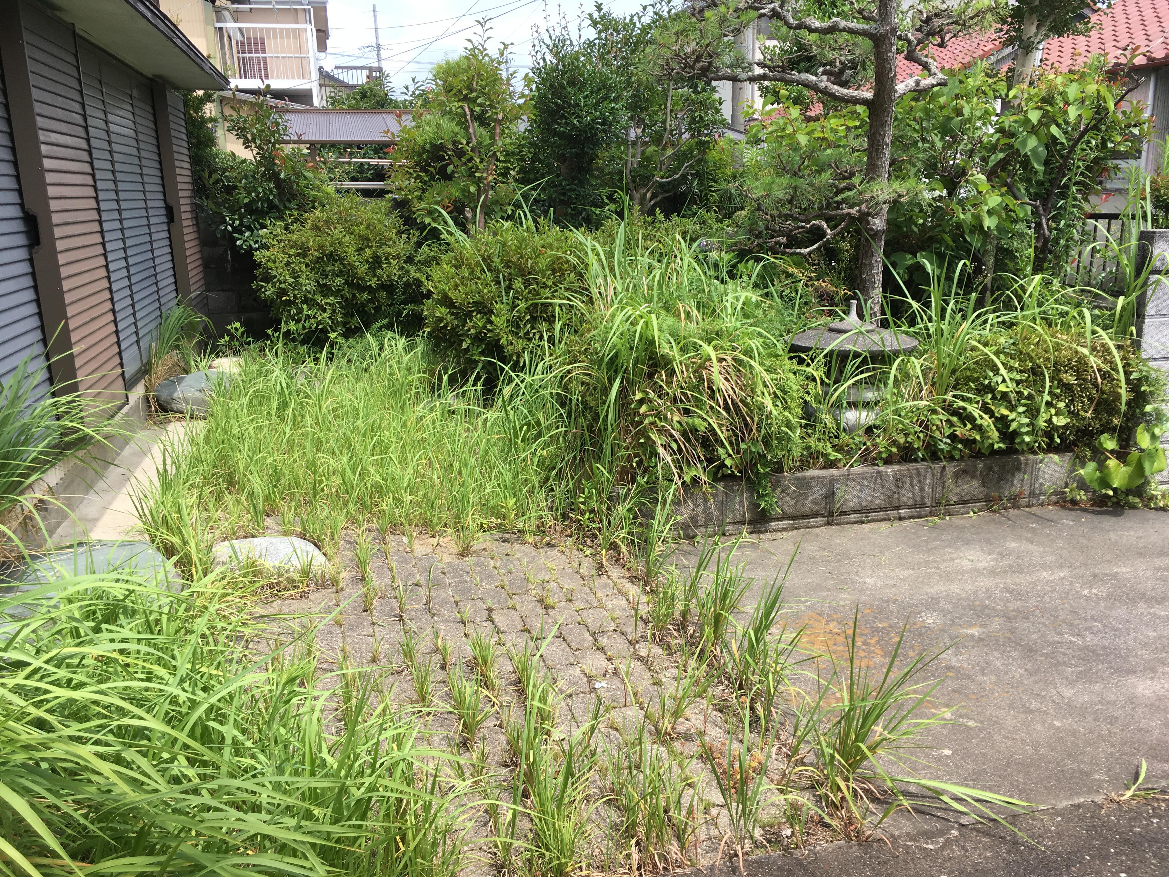草刈り・剪定前(浜松市南区)
