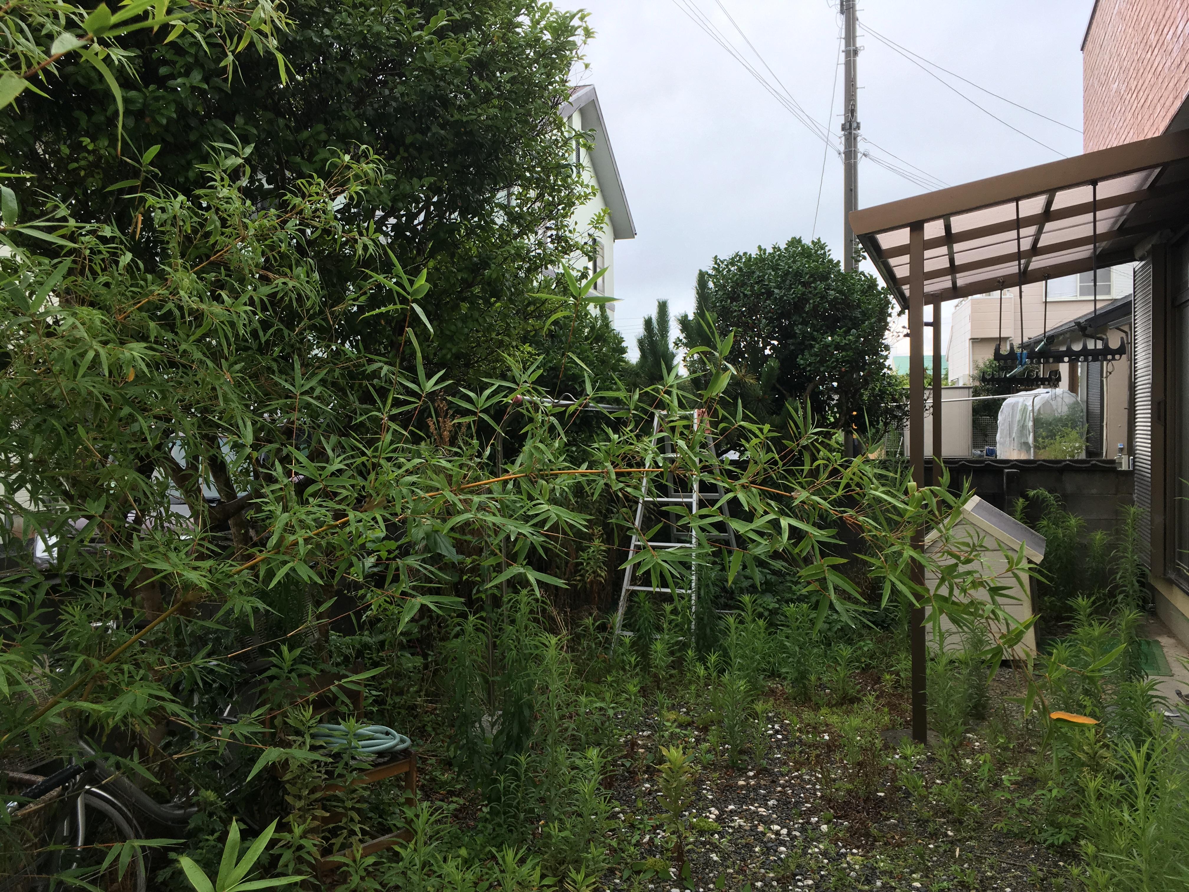 草刈り・伐採前(磐田市)