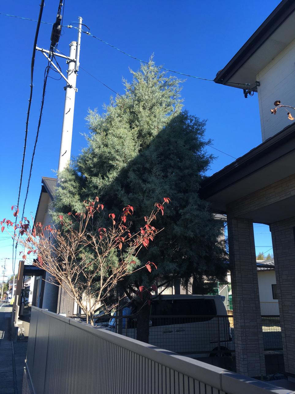 【庭木 剪定 枝葉 処分】浜松市 北区 えにしプランニング 便利屋