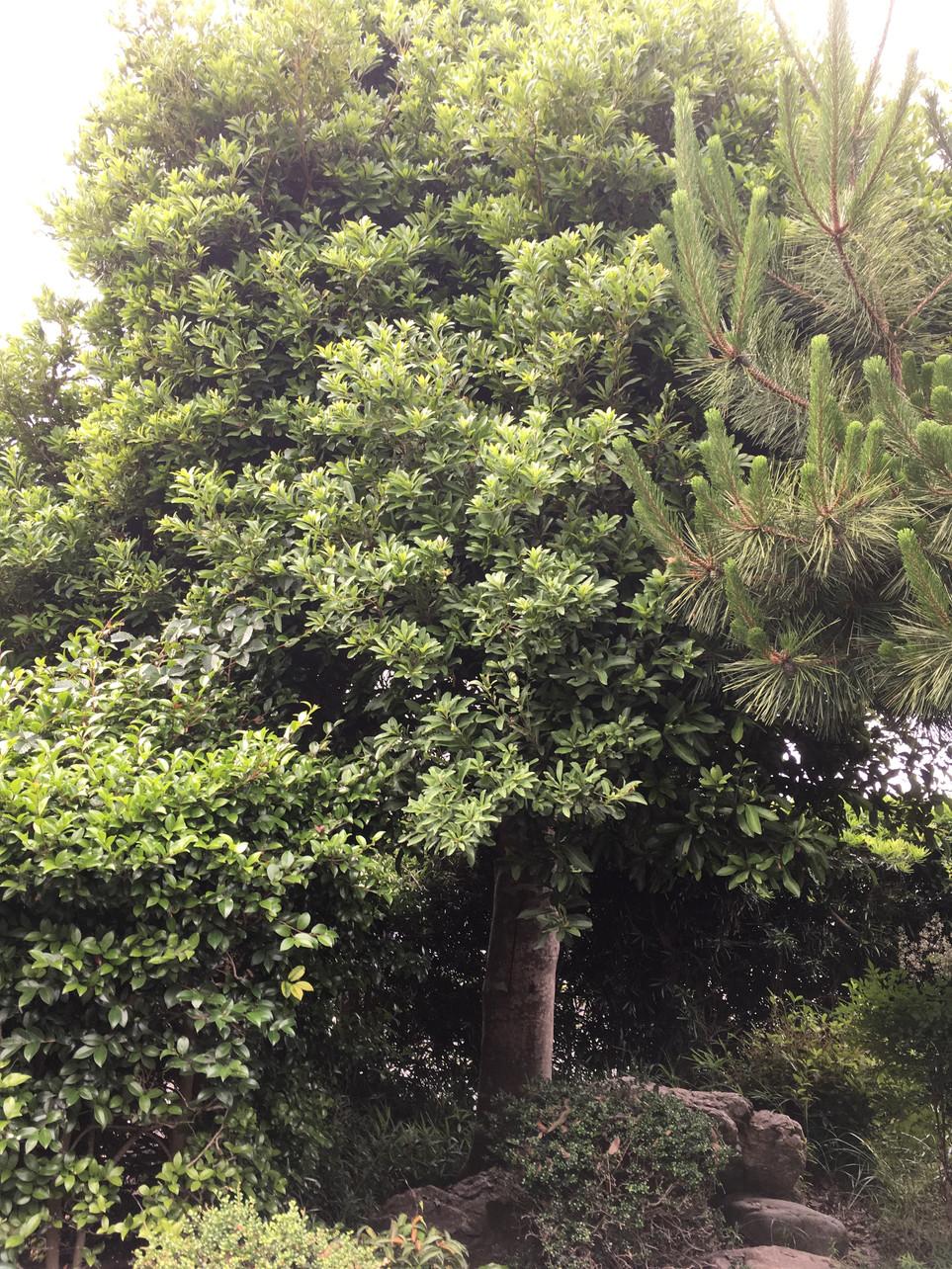 【伐採 伐木 枝打ち 処分】湖西市 えにしプランニング 便利屋 浜松