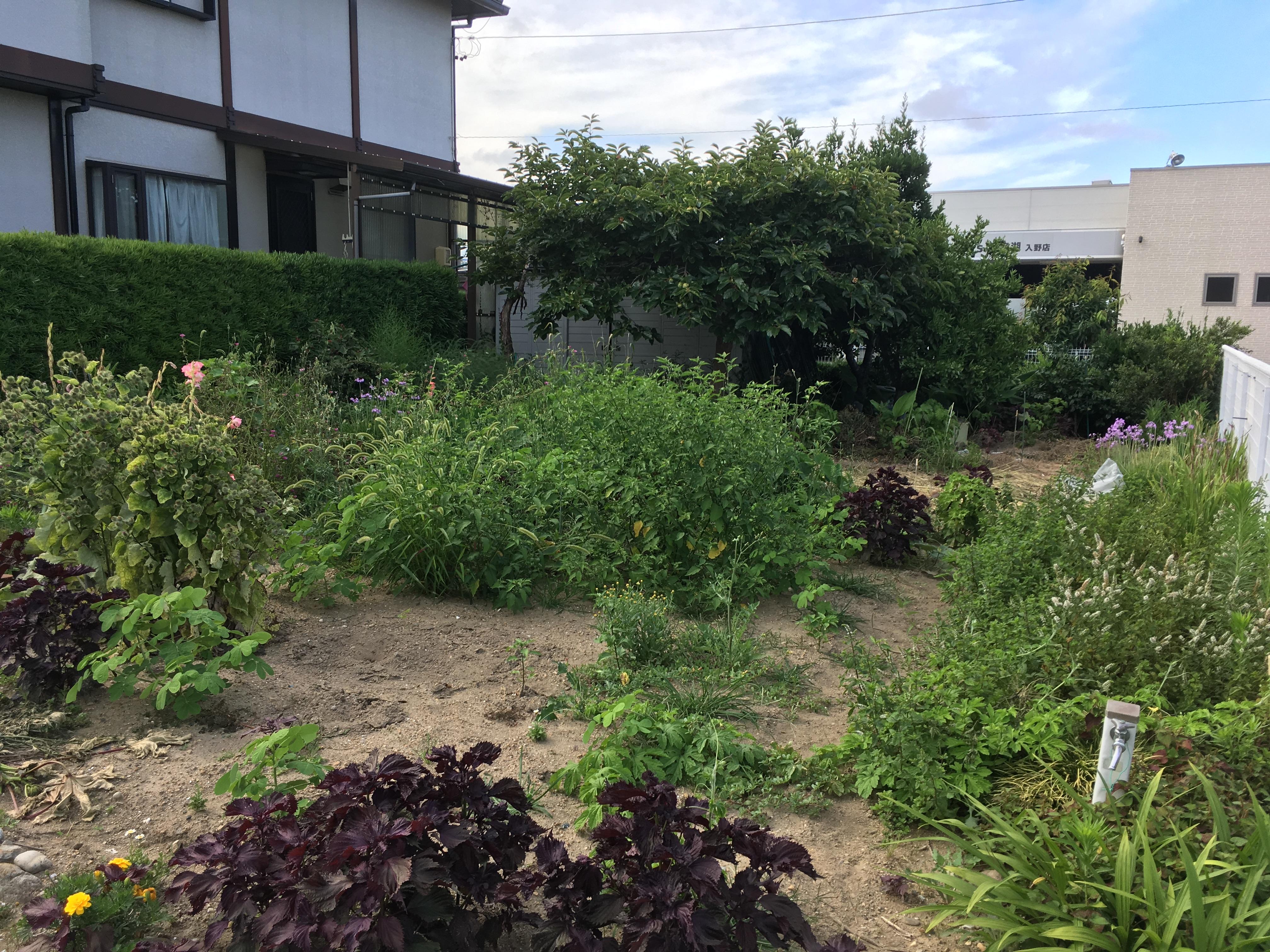草刈り・伐採前(浜松市西区)