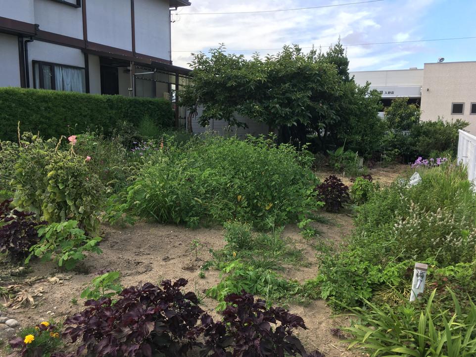 【剪定 畑 家庭菜園 草刈り 草むしり】浜松市 西区 えにしプランニング