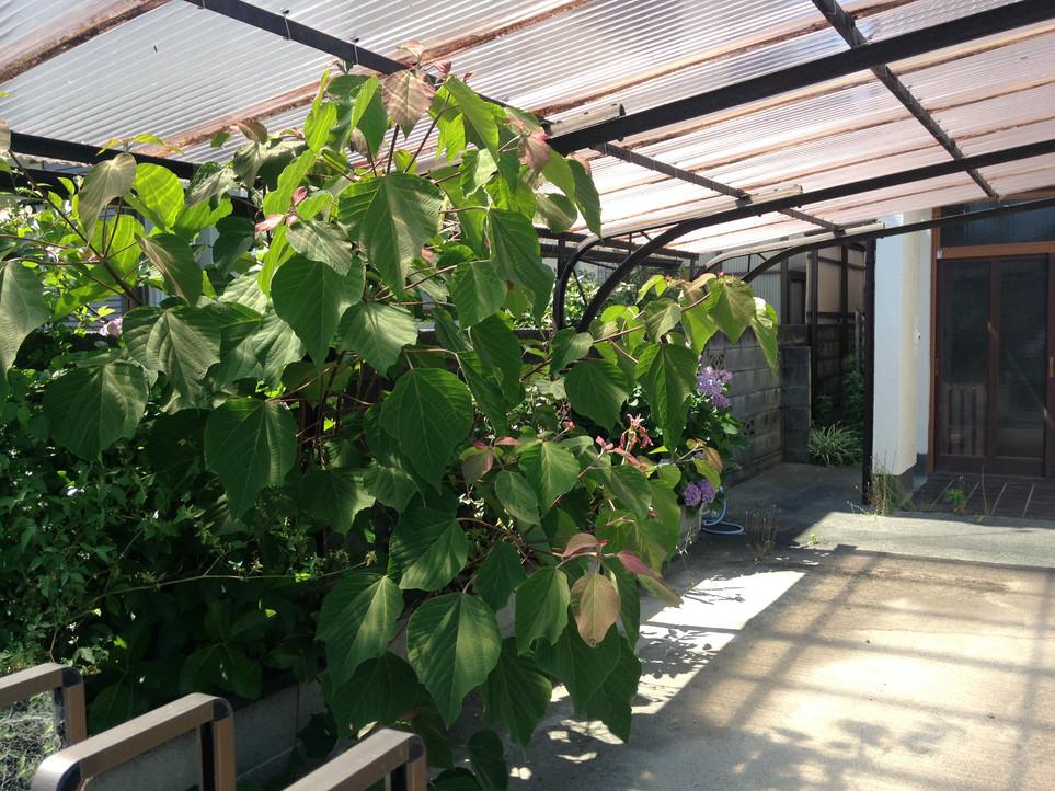 【草刈り 草むしり 剪定】えにしプランニング 便利屋 浜松市南区