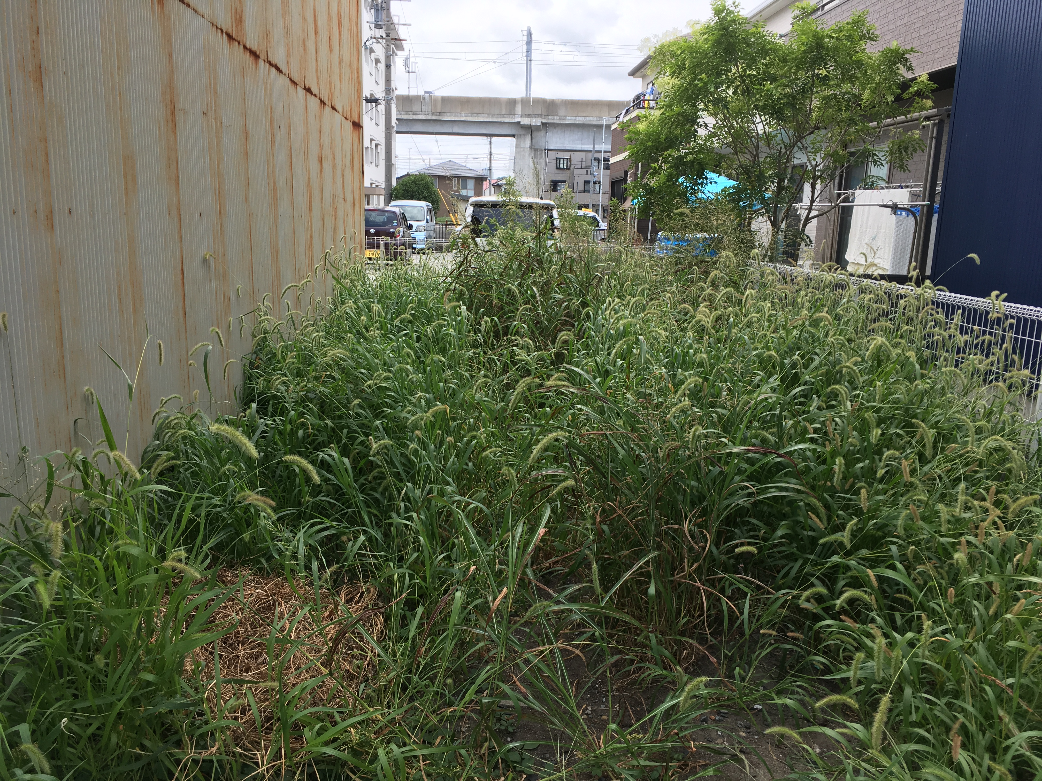 草刈り前(浜松市中区)