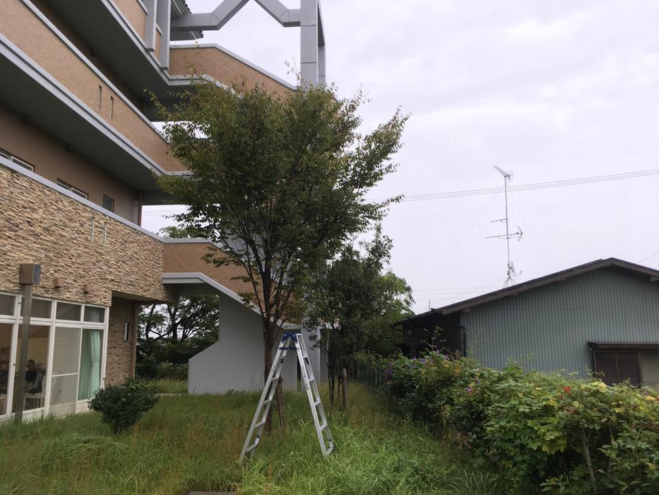 【浜松市西区 草刈り 伐採】高齢者 施設 えにしプランニング 便利屋
