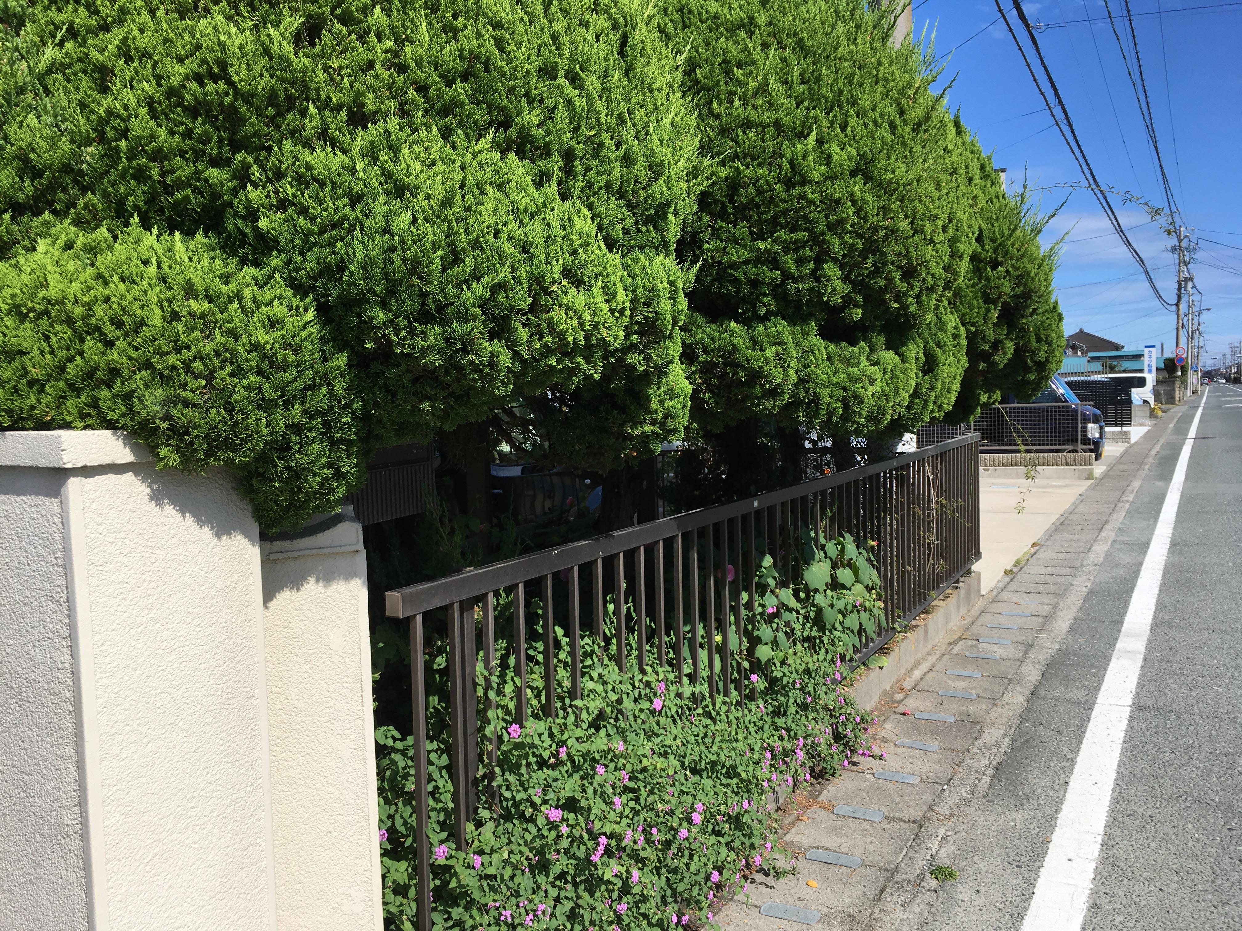 伐採前(浜松市西区)