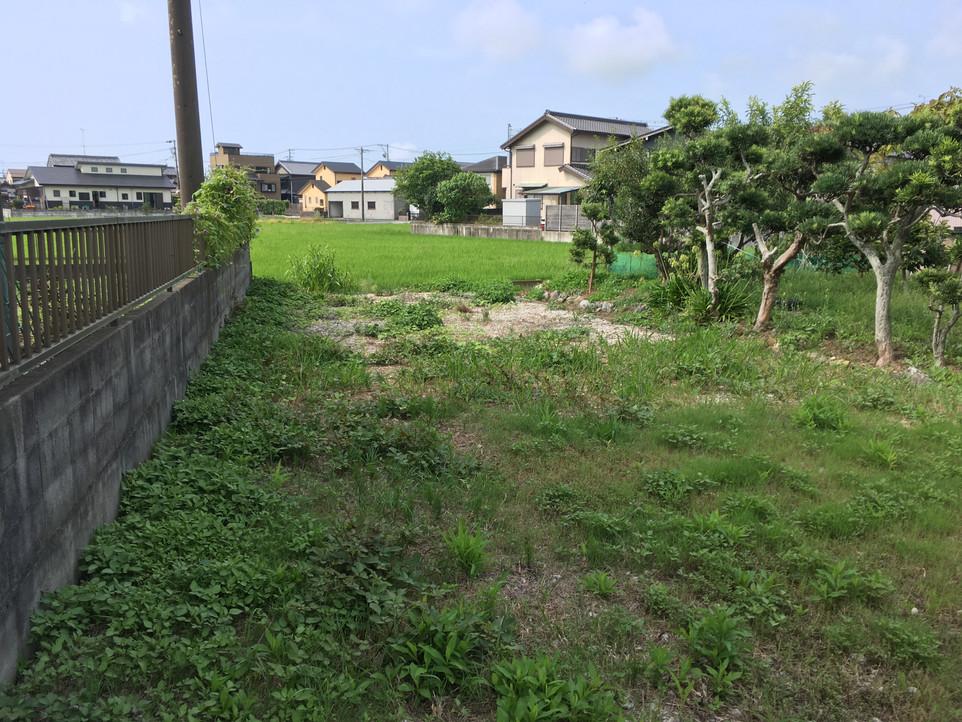 【除草剤散布の効果 画像比較】浜松市 えにしプランニング 草刈り 便利屋