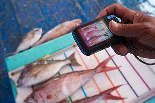 Redfish Tech.jpg
